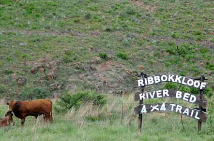 Camping at Ribbokkloof